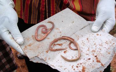 Moeten we wormen eten in plaats van ivermectine?